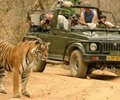 Wildlife and tourism